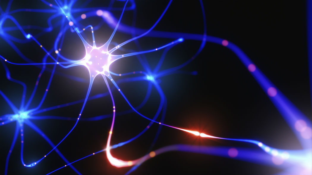 1535448607_neuroni